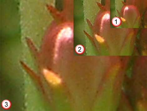 Inset 1 is the actual image while 2 and 3 are enlarged images that show pixelation