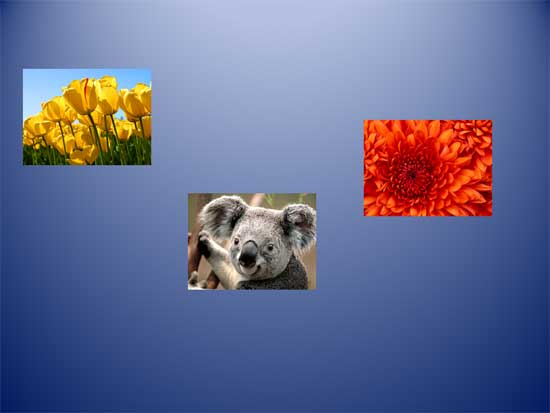 Unaligned and undistributed pictures resized to attain same height