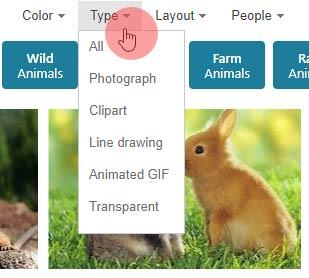 Bing Images Search by Type Filters