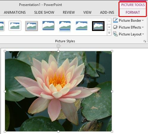 Changing Color Of Pictures In Powerpoint 2013 For Windows