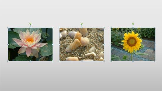 Resized and aligned pictures selected on the slide