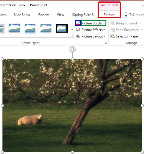 Picture Border button within the Picture Tools Format tab