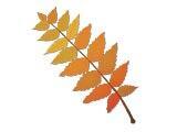 Fall / Autumn - Extras 06 Premium PowerPoint Templates